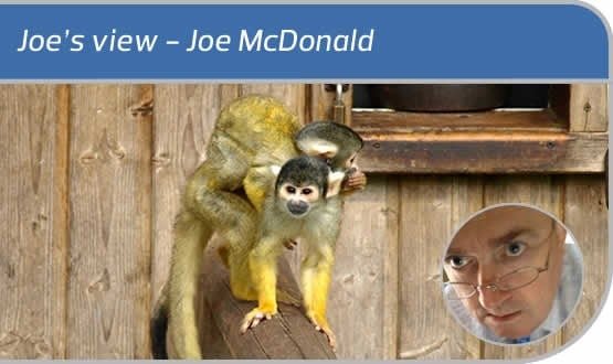 Joe's view: of capuchins and exemplars